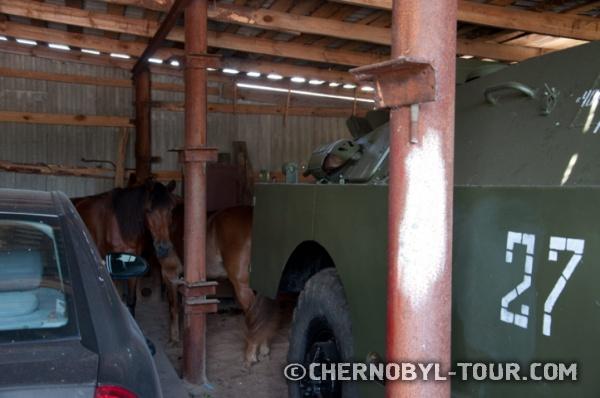 Лошади в с. Парышев
